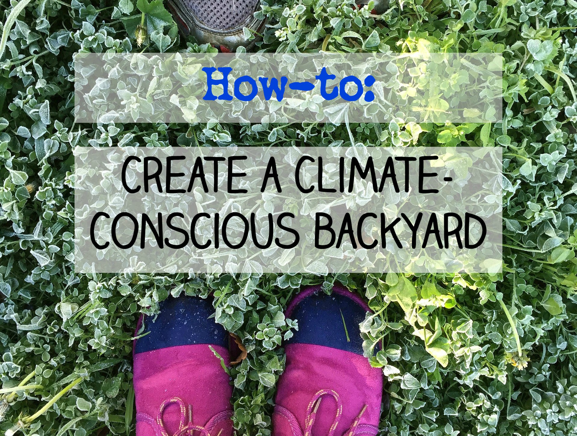 How to: Create a Climate-Conscious Backyard
